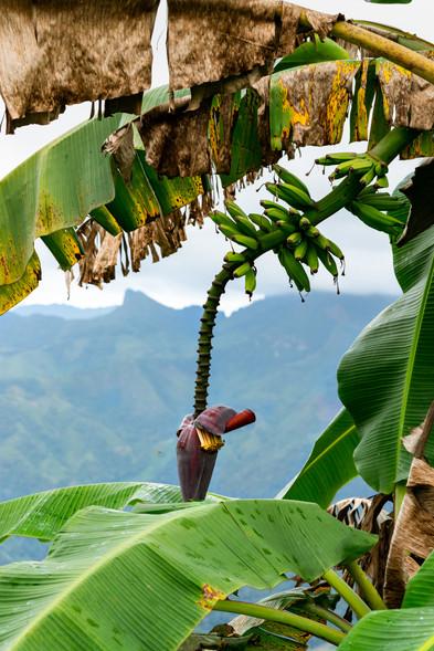 La zona, por su clima, da buenas frutas