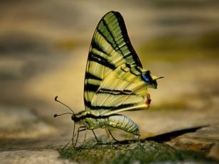 Kopie von The_Butterfly_Defect.jpg