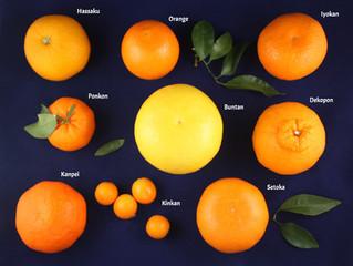 What's in season?....Citrus fruits