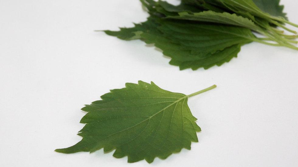 Green Perilla Leaf (Shiso)