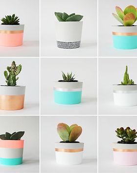 coral-herb-grid.jpg