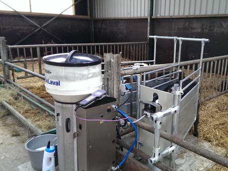 Buzağı Besleme Makinasının Önemini Biliyor Musunuz? / Do you know The importance of Calf Feeder?