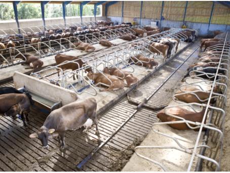 Hayvancılıkta Yem Maliyetlerini Düşürerek Çok Daha Fazla Kâr Elde Edin