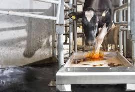Sağlıklı Sürüleriniz İçin Ayak Bakımının Önemi / The Importance of HoofCare For Your Animal Herd