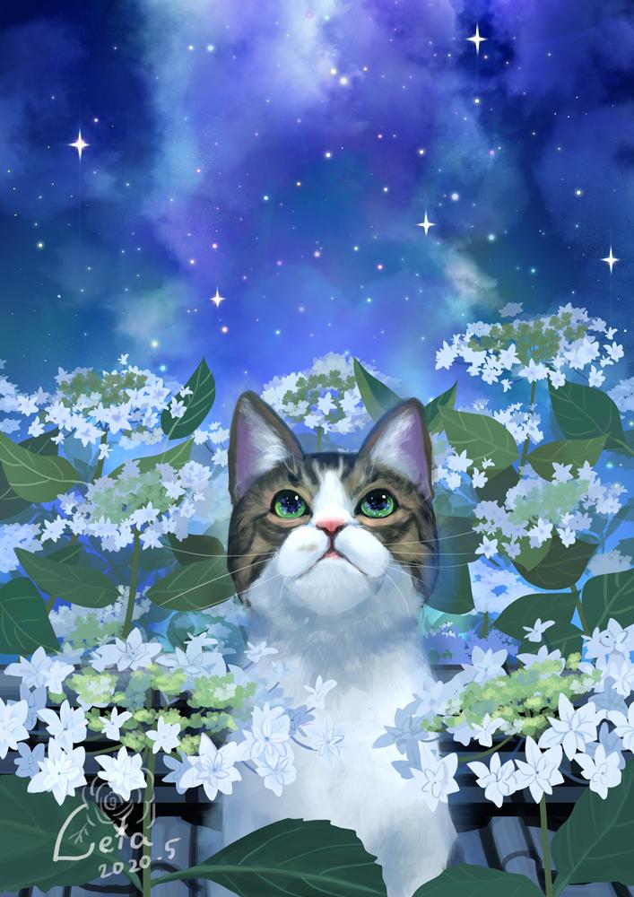 星空と紫陽花をみつめて