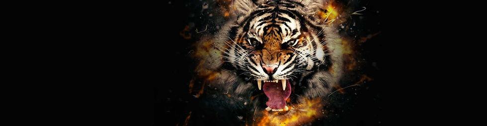 tiger-headstp-nobowl.jpg