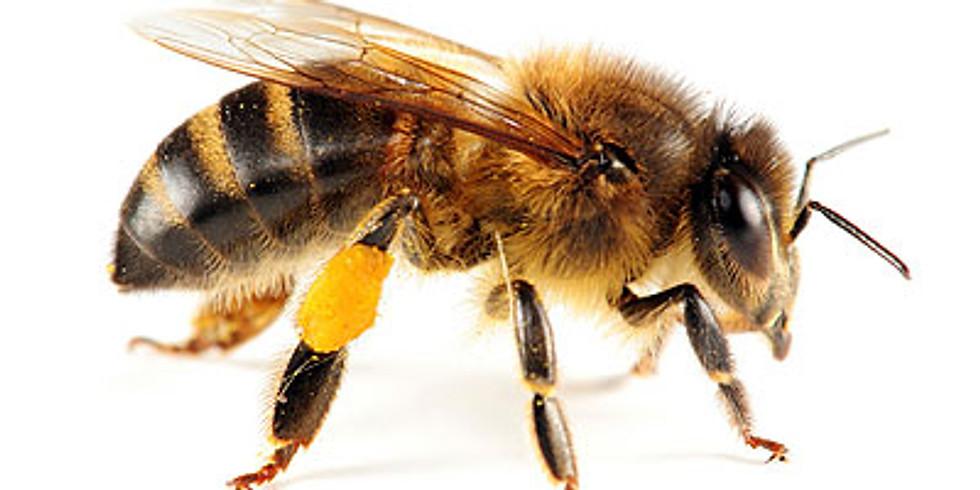 BEE BASICS - With Beekeeper Joerg Kessler