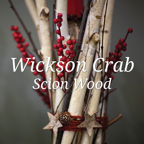 Wickson Crab Scion Wood