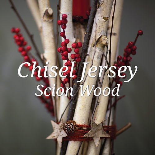 Chisel Jersey Scion Wood