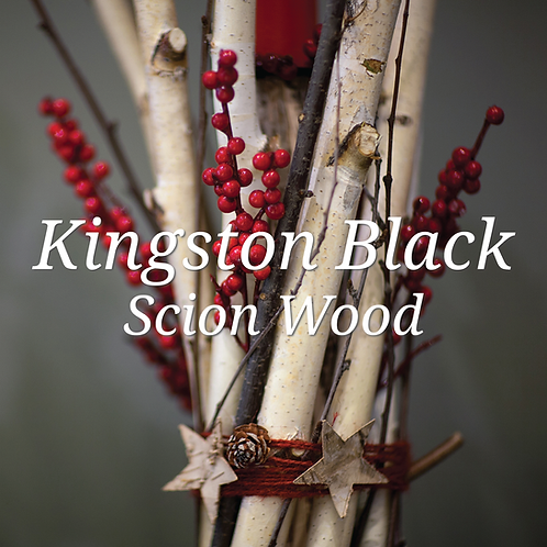Kingston Black Scion Wood