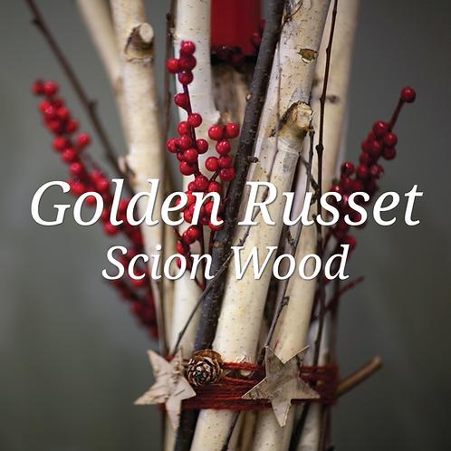 Golden Russet Scion Wood