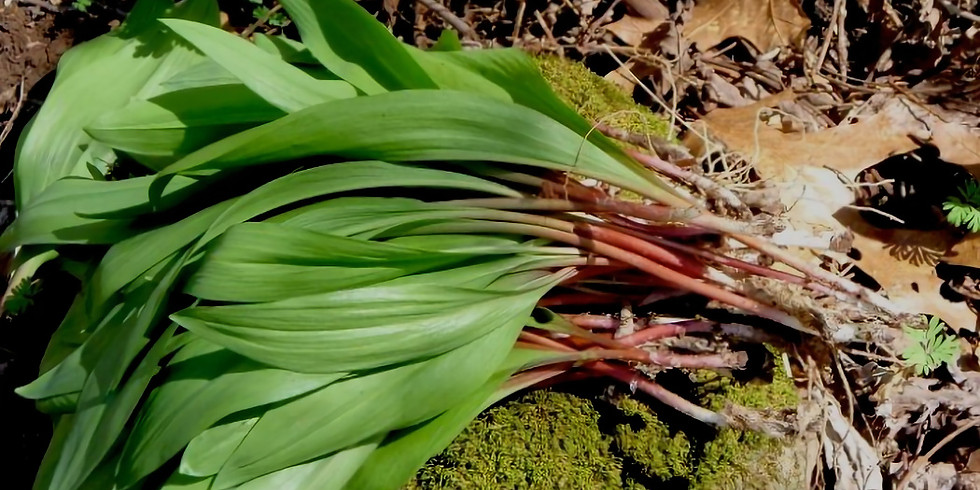 FORAGING FOR RAMPS - With Herdie