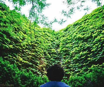 Foliage 8x10