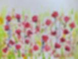 Poppies flowers poppyfields