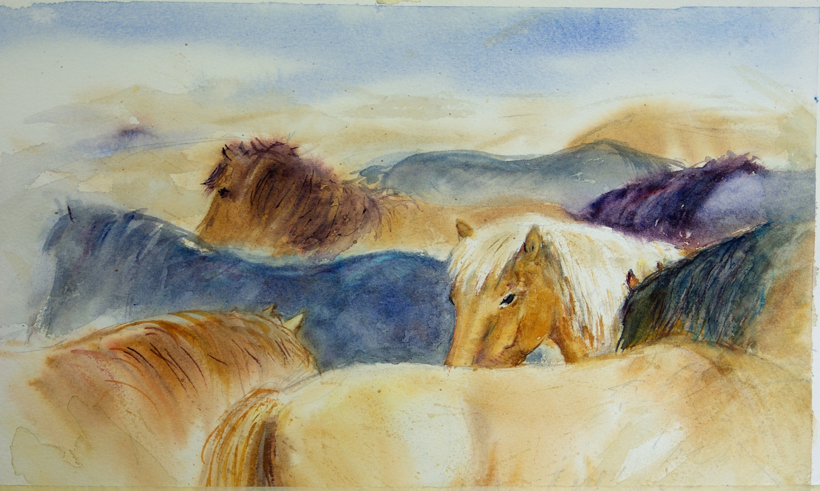 Islandia : In de kudde