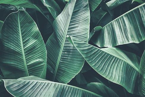Palm leaf (1).jpg