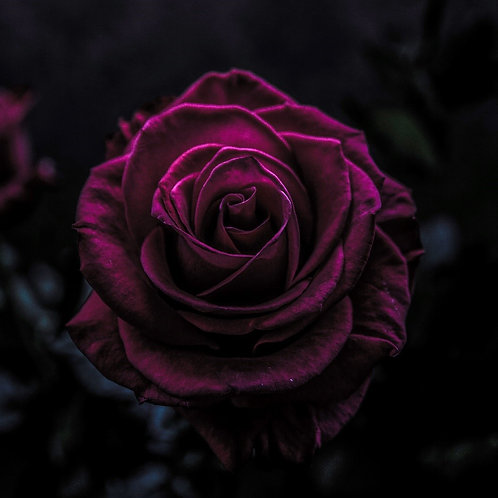 A Rose is a Rose is a Rogue ~ The History, Mystery, Chemistry of Rose  Fragrance
