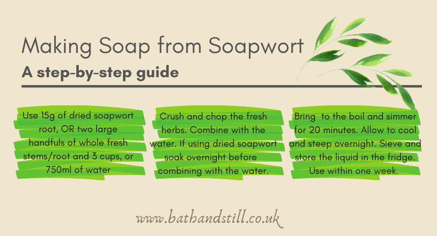 An Infogram Step-by-Step guide to making soap from soapwort