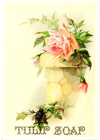 An old-fashioned rose is accompanied by a bee playing the violin in a Victorian soap advertisement