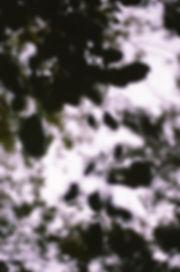 leaves1_provia.jpeg