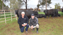 Top buyer favours Hannibal H8 sire