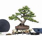 Bonsai supplies.jpg