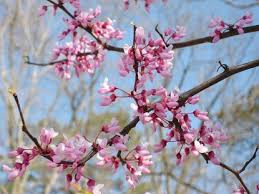 Spring is Arriving!