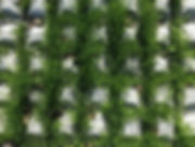 Grass-After.jpg