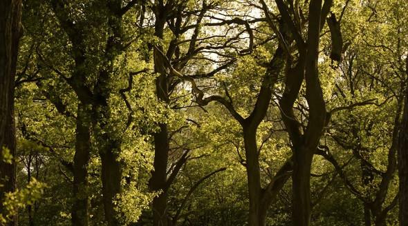 Ville Forests