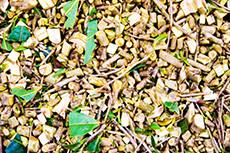 30 year bancha san juu cha japanese green tea