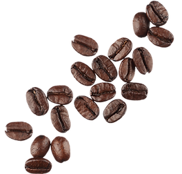 coffee-bean-png-4.png