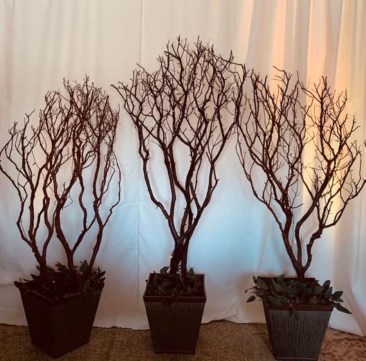 3 Natural Manzanita 5ft-6ft.jpg