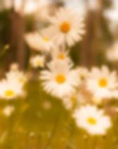 pexels-photo-61379.jpg