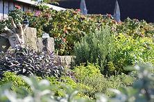 Garten-Kräuter.JPG