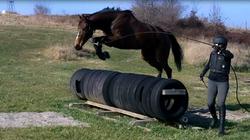 Gib Tire Jump 5