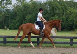 Cool Breeze Equine