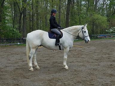 amateur friendly horses