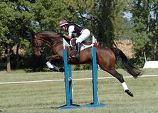 eventing, show jumping