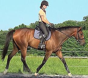 Professional horse training, confidence building
