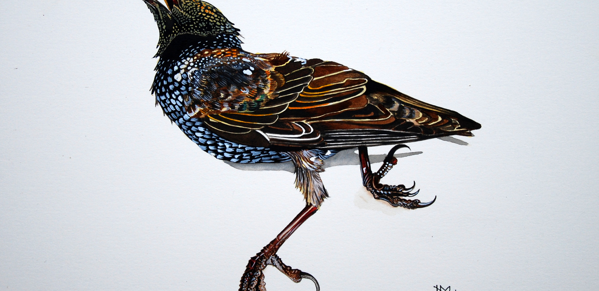 Starling (2017) SOLD