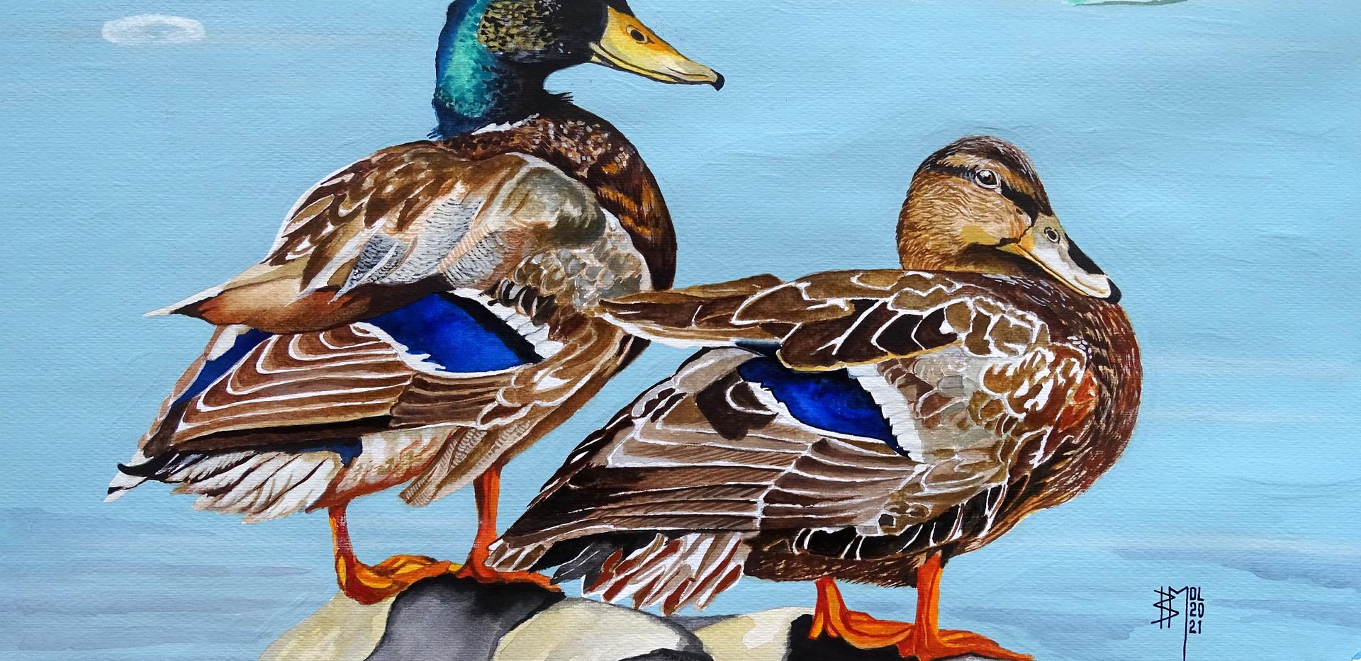 Wild Ducks (2021)