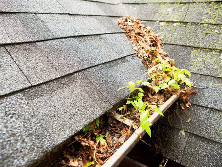 CLEAN YOUR GUTTERS!