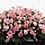 Thumbnail: Mixed Pink Casket Spray