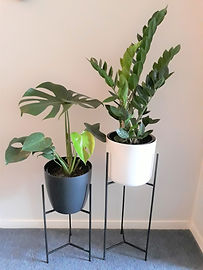 ned plant stands with monstera and ZZ.jpg