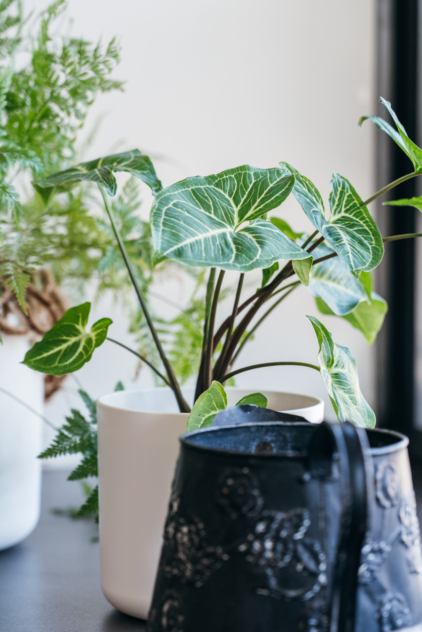 Cool Plants Indoor Plant Service Tauranga