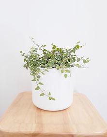 Cool Plant+Pot