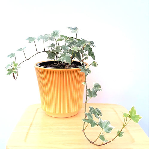 What's Cool Indoor Plant Package - 4 plants