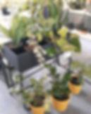 black metal plant stand 60cm.jpg