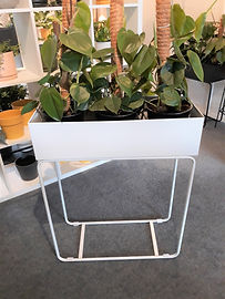White metal plant stand.jpg