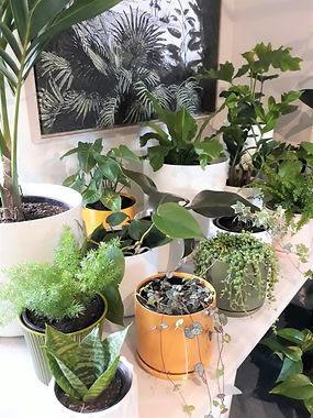 Cool Plants showroom.jpg